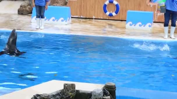 BANGKOK,THAILAND - FEBRUARY 18, 2016 : Sea lion show for tourists in Bangkok, Thailand