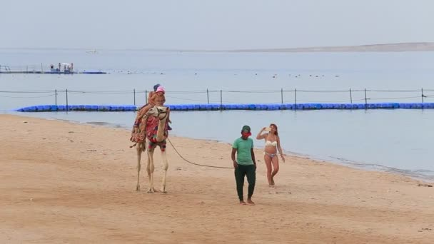 SHARM EL-SHEIKH, EGYPT - MAY 25, 2018 : Tourists drive their children on a camel on the beach near the red sea in Sharm El Sheikh, South Sinai, Egypt. Woman is taking pictures of children on a camel