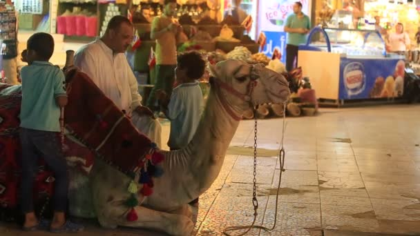 SHARM EL-SHEIKH, EGYPT -  MAY 14, 2018: Egyptian man invites tourists to ride a camel in the old city market at night in Sharm El Sheikh, South Sinai, Egypt