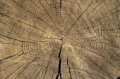 Zobrazení makra closeup na konci řezu dřevěné části stromu s trhlinami a ročními kroužky. Plochý dřevěný povrch s ročními kroužky.