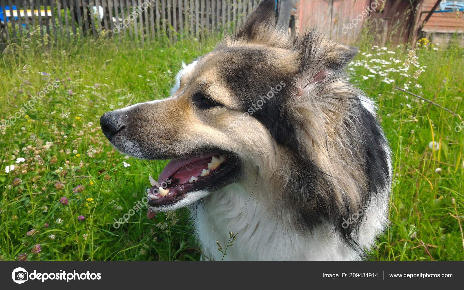 Beautiful Dog Nature Stock Photo Maximgor 209434914