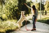 Kaukázusi kislány, képzés s fehér szibériai kutyát a parkban, reggel.