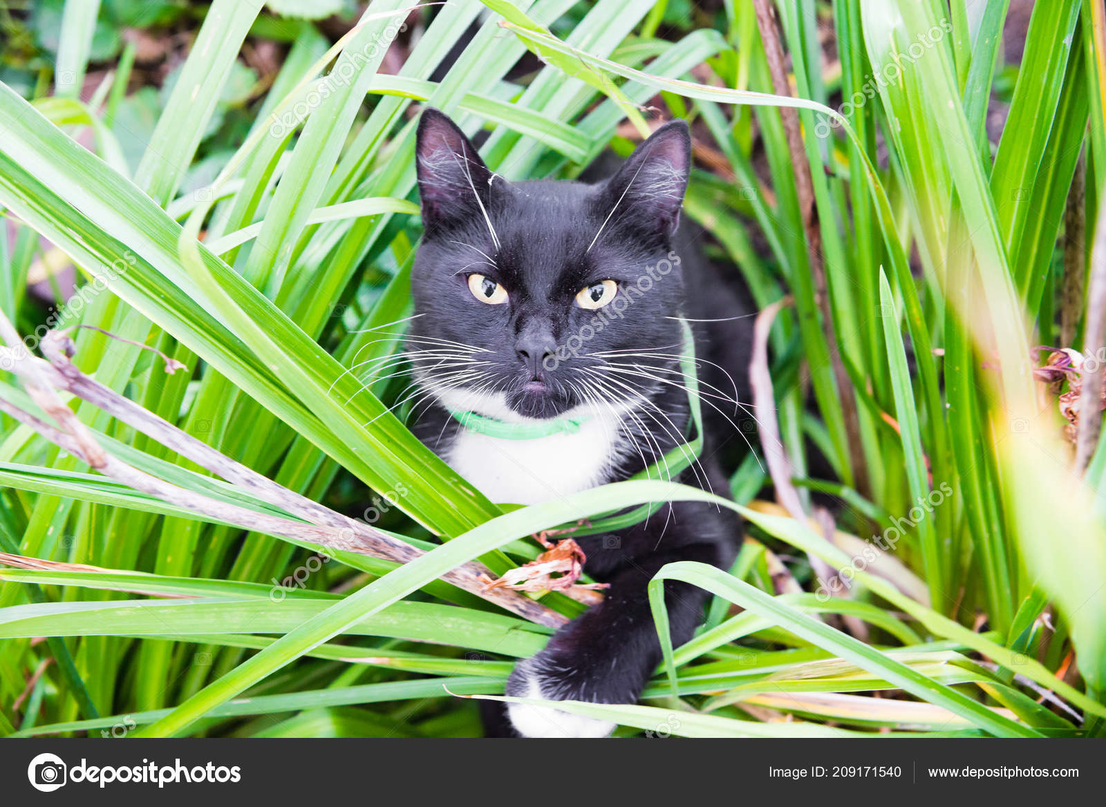 1599f19e1 Cute black and white cat in the grass — Stock Photo © Pike-28 #209171540