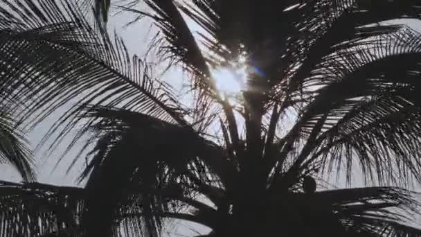 Sluneční paprsky zářící skrze větrno siluetu lístečky palem na Maledivách