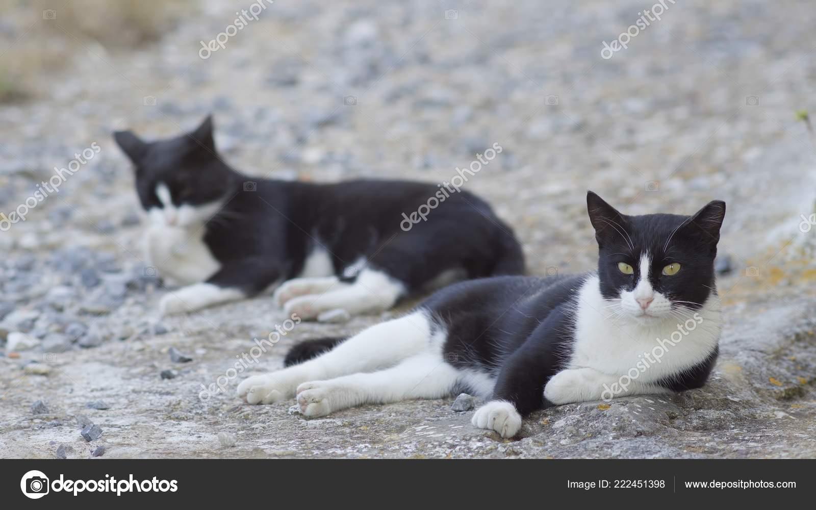 18780ba69f49e Um casal de gatos vadios de preto e branco deitado preguiçoso na sombra em  um bairro Rural na Grécia — Foto de anokato