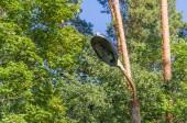 Régi elektromos lámpa egy elhagyott parkban, a fák és az ég háttere