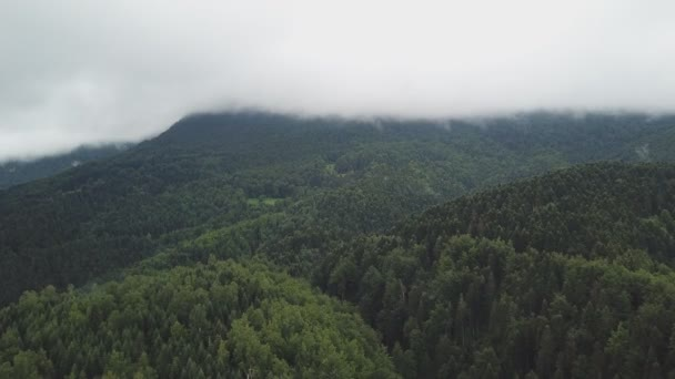 Landscape of mountains and fog. The mountain range is lush with pine forests.
