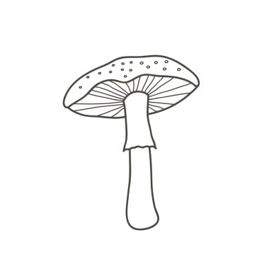 Amanita mushroom drawing. Vector linear illustration by hand in doodle style.
