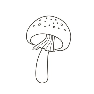 Amanita mushroom drawing. Vector linear illustration doodle style