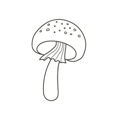Amanita mushroom drawing. Vector linear illustration doodle style