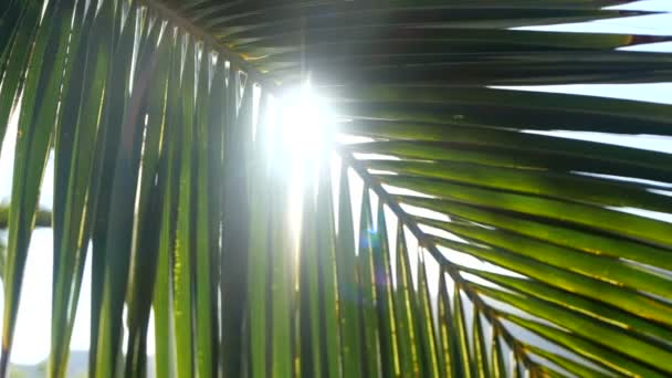 Sun rays pass through the branches of palm trees moving by tropical breeze