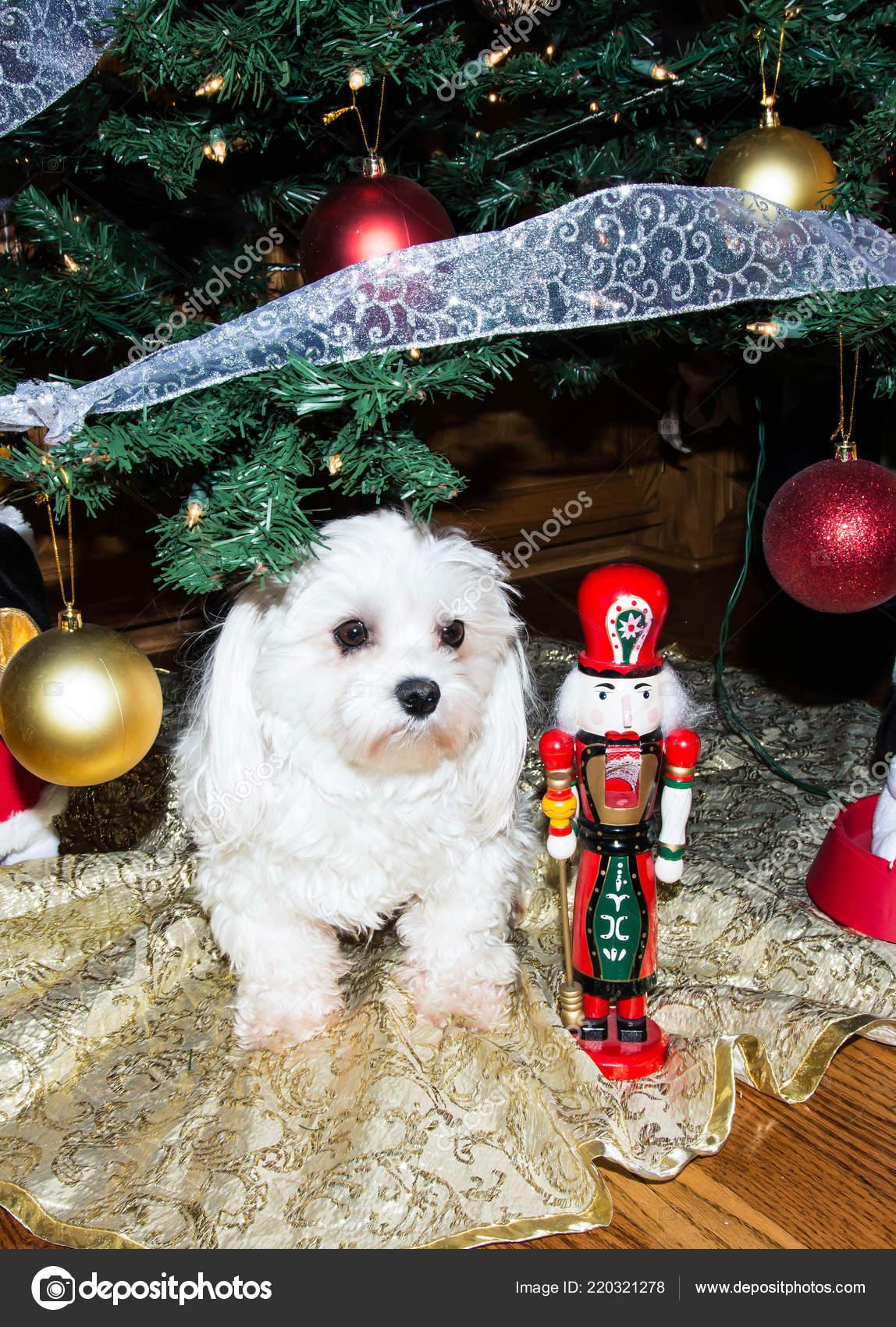 Maltese White Dog Christmas Tree Nutcracker Ornaments — Stock Photo