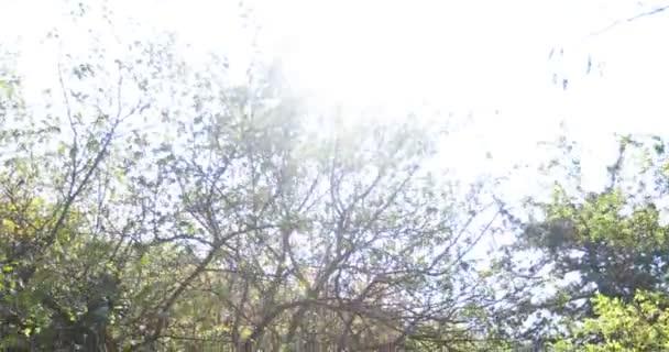 Les na podzim. Kamera jeřáb střílet z koruny stromů na nízký roh lesní cesty a podívat se na malou louku