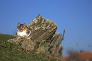 cat cats rock nature niceness animal dumb things pussycat feline stone
