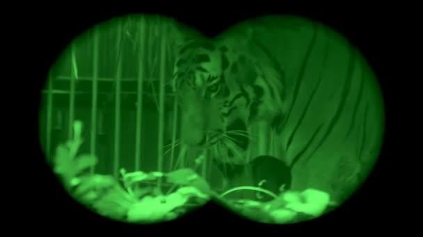 Veszélyeztetett nagy tigrisek, éjjellátó keresztül