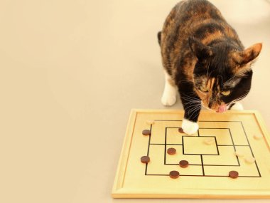 Board game Merells, Morris. Tricolor cat moves the chips on the playing field. Concept logic
