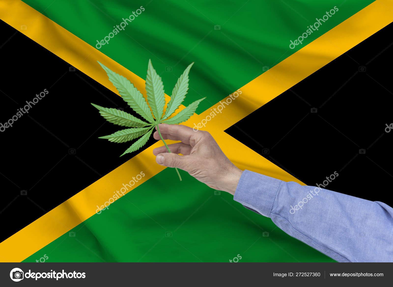 Легализация марихуаны на ямайке крымские семена конопли купить