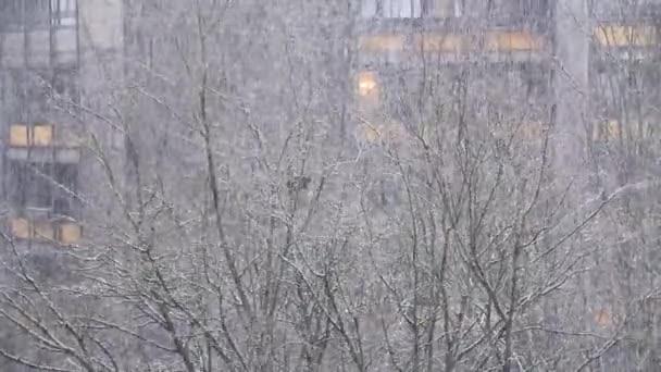 Herbst, Winterlandschaft, kahle Äste, weißer Schnee, der auf den Boden fällt, Konzept der Wettervorhersage, Schneefälle, Saisonwechsel