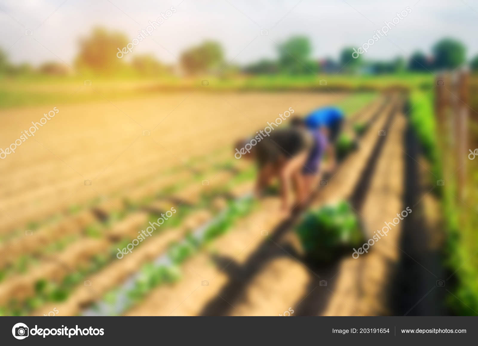 background information in world agriculture
