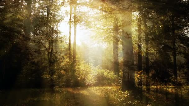 Bright Forest Scenery Background Animation