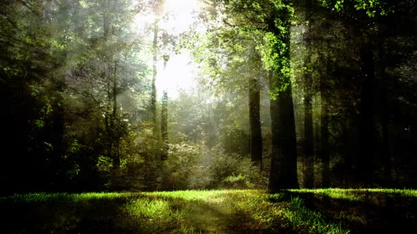Green Fantasy Forest Background Animation