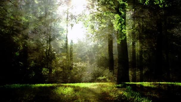 Zelená Fantasy Forest pozadí animace