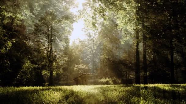 grüne Fantasie Wald Hintergrund Animation