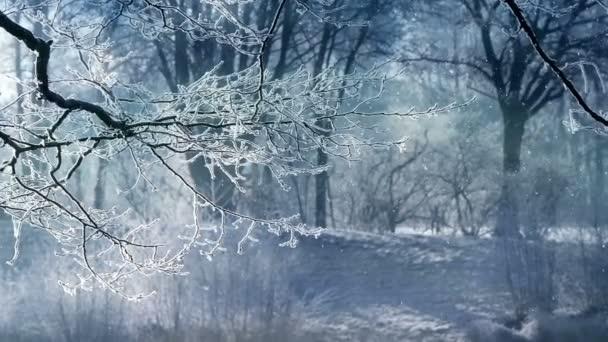 Dieser Videoclip zeigt eine wunderschöne Winterlandschaft und fallenden Schnee