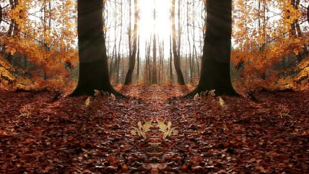 Podzimní roční období v lese