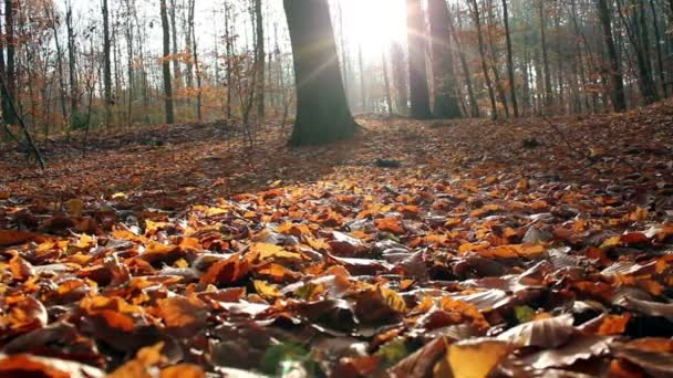 Autumn season background in the forest