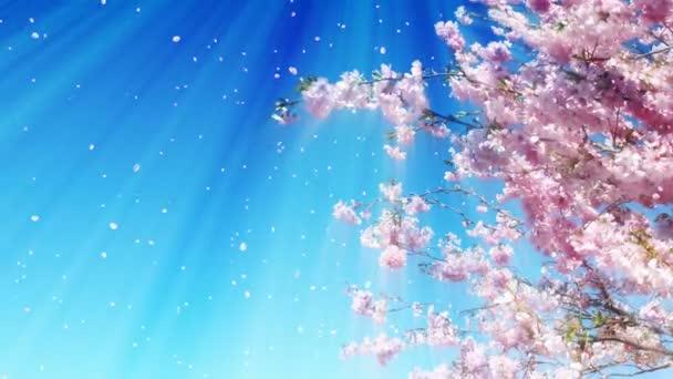 Sakura Tree And Blue Sky Animation