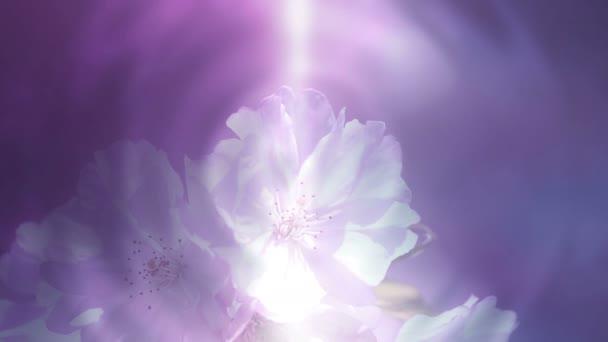 Színes virágos háttér és puha fény