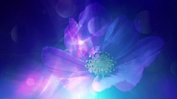 Barevné květinové pozadí a měkké světlo