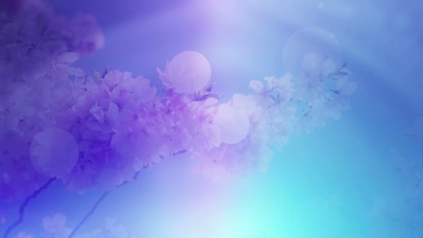 Colorful Floral Background And Soft Light