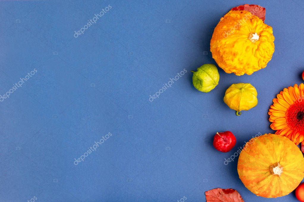 Top view of yellow and orange flowers and pumpkins on blue background with copy space. Blank greeting card for creative work design. flat lay