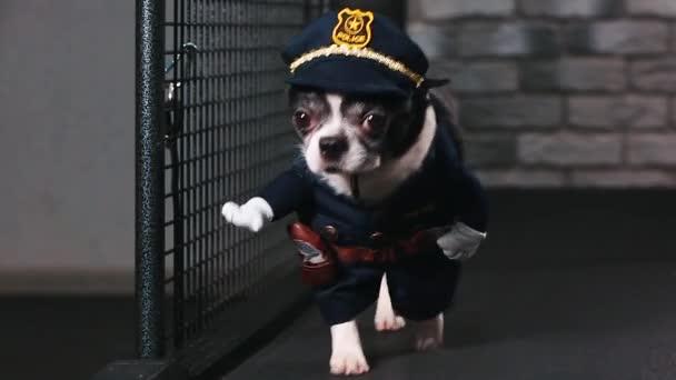 Fitness motiváció vicces vicc. kis kutya öltözött, mint egy rendőr megy egy taposómalom. Hűvös Szúró kisállat. Videofelvétel. Elölnézet.