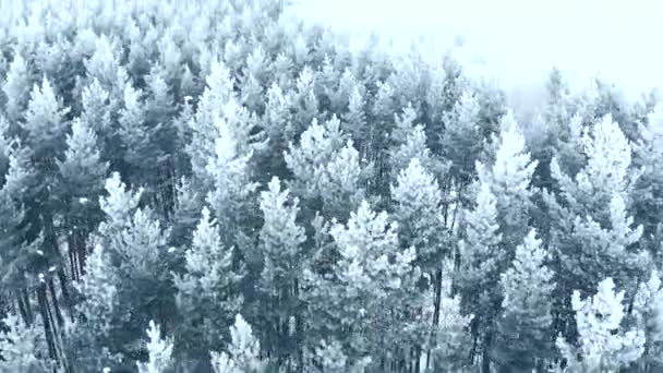 Winter season. Snow forest, aerial shot. Breathtaking natural landscape, frozen forest and dark field road with snow.