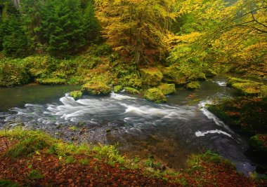 A beautifully clean river flowing through a colorful autumn forest