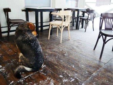 """Картина, постер, плакат, фотообои """"грустная собака в зимнем кафе на деревянном полу, покрытом снегом, плохая погода, зима, концепция помощи животным в холодный сезон """", артикул 229922802"""