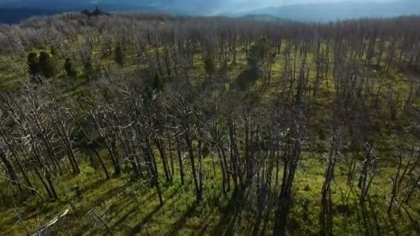 Bäume nach Waldbrand in Schaden Ökologiekonzept