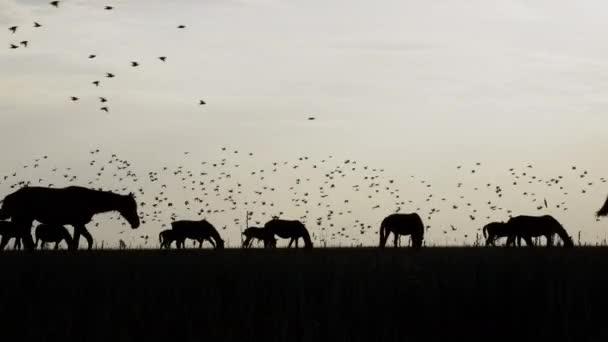 Fekete sziluettek ló csorda sztyeppei és repülő madarak az égen