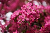 Photo close-up view of beautiful bright pink almond flowers, selective focus