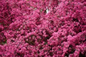Photo beautiful bright pink almond flowers on branches