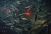 Fotografie elevated view of large flock of red and black carps swimming in water