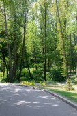 Photo scenic view of asphalt path and trees in park