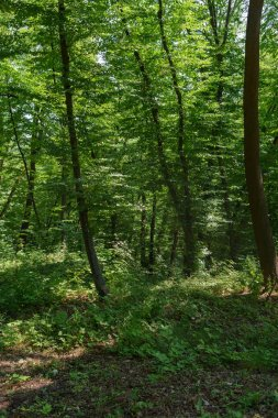 scenic view of green trees with sunlight in forest