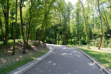 scenic view of asphalt path in park with tress under sunlight
