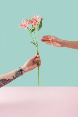cropped view of tattooed hand presenting pink lily flowers on turquoise and pink background