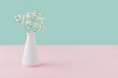 vase with white tender flowers on pink and turquoise with copy space