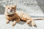 Fotografie cute red cat lying on white carpet and looking at camera